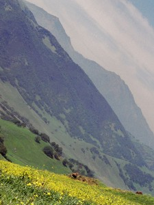 mountain and mustard cropped