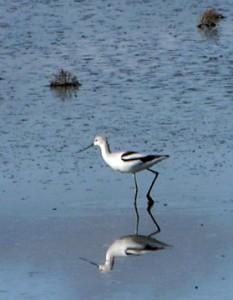 Skaggs birds.3